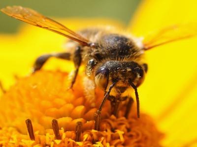 du-miel-en-essonne-a-la-miellerie-de-tigery-image-11
