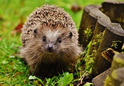 image de couverture de Des refuges pour les petits mammifères