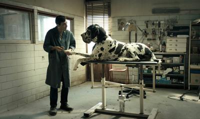 dogman image.jpg