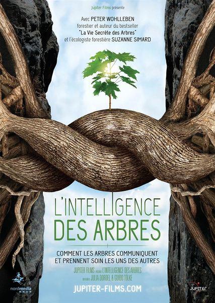 L intelligence des arbres affiche