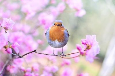 spring-bird-2295436_640.jpg