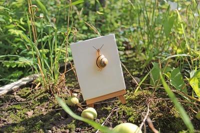 snail-649930_960_720.jpg